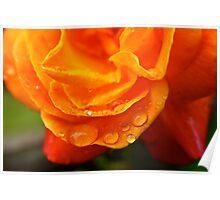 Rain Drops on an Orange Rose Poster
