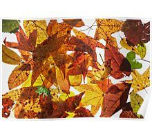 Pressed Leaves Poster