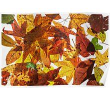 Pressed Leaves Poster