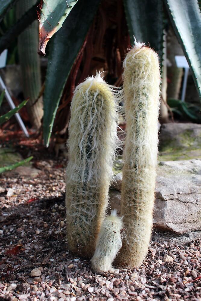 Cacti by Faizan Qureshi