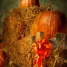 Pretty Pumpkins! by vigor
