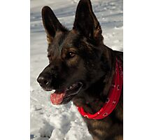 Winter Dog Photographic Print