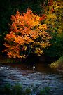 Angler on an Autumn River by Charles Plant