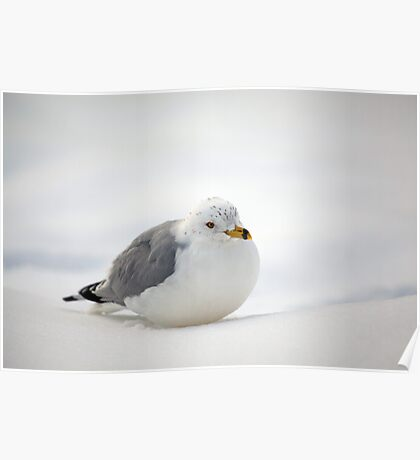 Gulls Winter Pose Poster