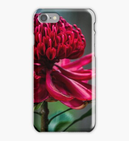 Waratah iPhone Case/Skin