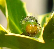 Heimlich In The Holly bush. 2 by starwarsguy