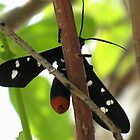 Spotted Wasp Moth. by starwarsguy