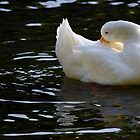 Shy Duck by ibullock