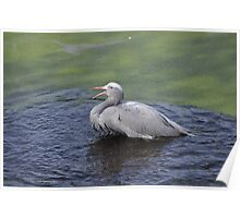 Bird on the Pond 2 Poster