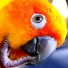 Sunshine.. Sun Conure iPhone Case... NZ by AndreaEL