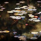 Autumn Pond by Linda  Makiej Photography