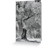 untitled - tree Greeting Card
