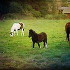 Three Ponies by Lynn Starner