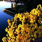 waterway by dandefensor