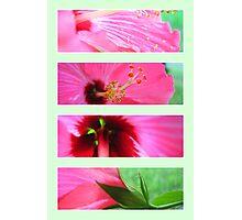 Florals (Original) Photographic Print
