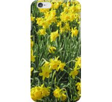 Daffodils for iPhone iPhone Case/Skin