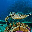 Hawkesbill Turtle by MattTworkowski