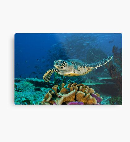 Hawkesbill Turtle Metal Print