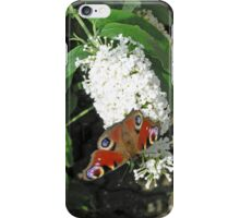 Peacock butterfly on white buddleia for iPhone iPhone Case/Skin