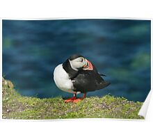 Posing puffin Poster