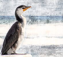 Seabird by Margi