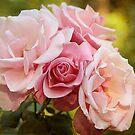 Shades of Pink by Lynn Starner