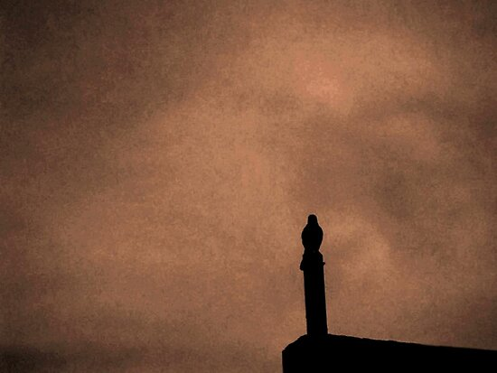 Mockingbird - Standing Watch by Glenn Cecero