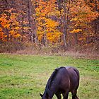 Horse in Autumn Field by Michael Cummings