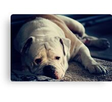 It's a dog's life . .  Canvas Print