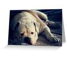 It's a dog's life . .  Greeting Card
