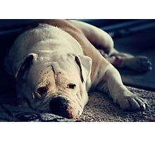 It's a dog's life . .  Photographic Print