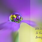 Aubretia raindrop by cards4U