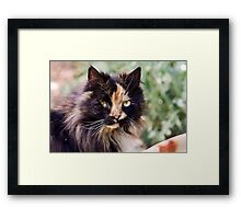 Subdued Rosie Framed Print