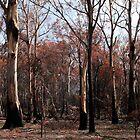 Tasmanian Autumn by kathycee