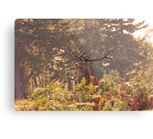 Wollaton Park rutting  Metal Print