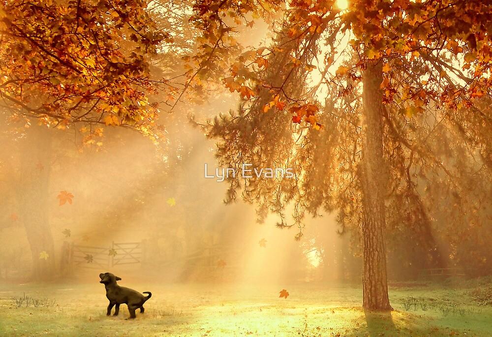Chasing sunbeams by Lyn Evans