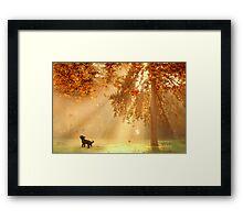 Chasing sunbeams Framed Print