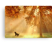 Chasing sunbeams Canvas Print
