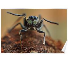 ant mimic jumping spider Poster