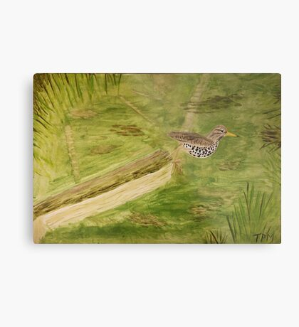 Spotted Sandpiper on the Kinnickinnic River Metal Print