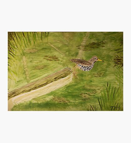 Spotted Sandpiper on the Kinnickinnic River Photographic Print