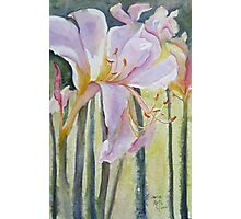 Resurrection Lilies Photographic Print