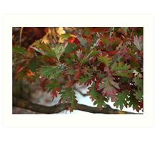 Red and Green Leaves over the Oconomowoc River Art Print
