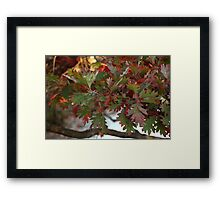 Red and Green Leaves over the Oconomowoc River Framed Print