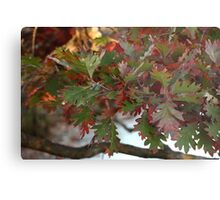 Red and Green Leaves over the Oconomowoc River Metal Print