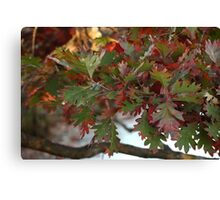 Red and Green Leaves over the Oconomowoc River Canvas Print