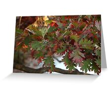 Red and Green Leaves over the Oconomowoc River Greeting Card