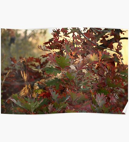 Red and Green Fall Leaves II Poster