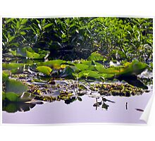 Watery Leaves - Lake Ainsworth Poster