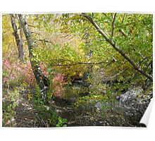 Fall Colors At The Creek Poster
